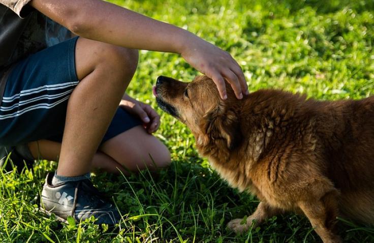 Wat te doen als u bent gebeten door een hond?